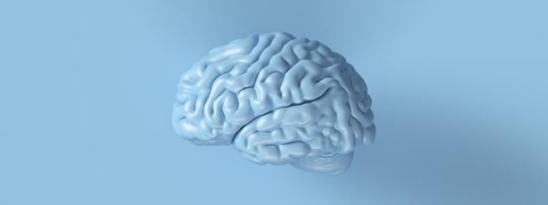 neurological-forebrain-and-hindbrain
